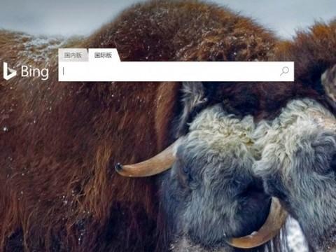 微软Bing国际版中国发布:专注英文搜索